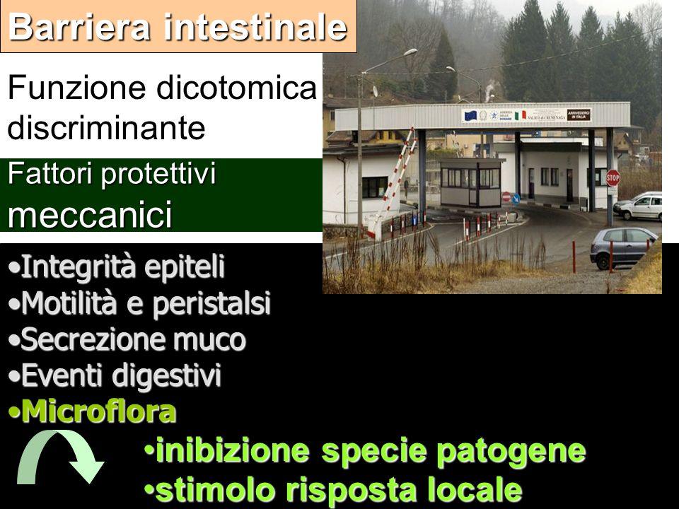 Barriera intestinale Funzione dicotomica discriminante