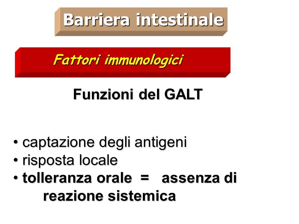 Barriera intestinale Funzioni del GALT captazione degli antigeni