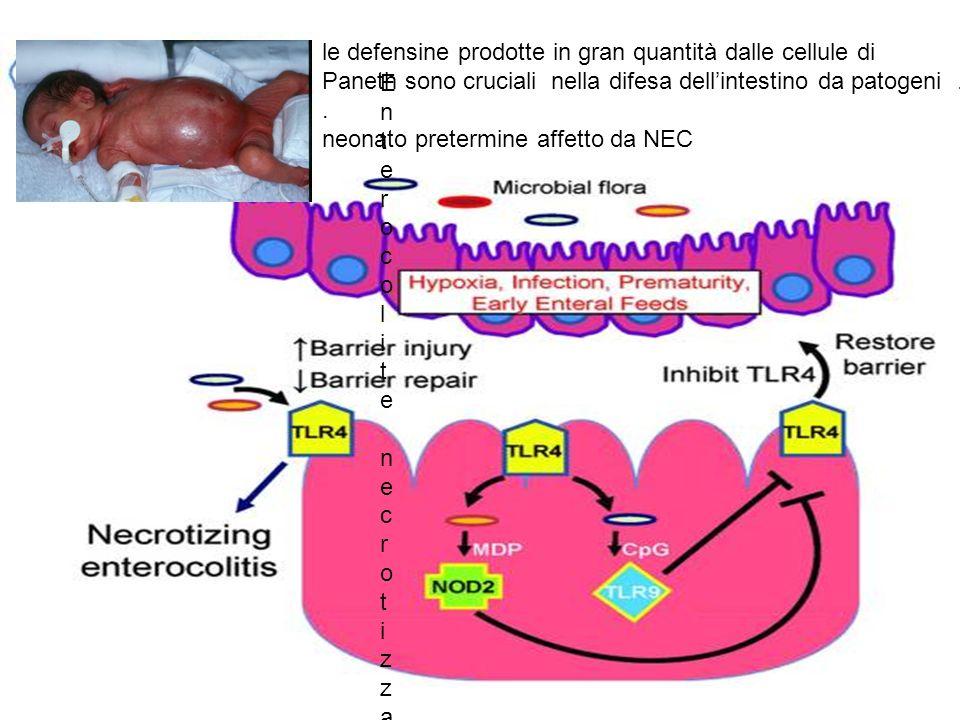 le defensine prodotte in gran quantità dalle cellule di