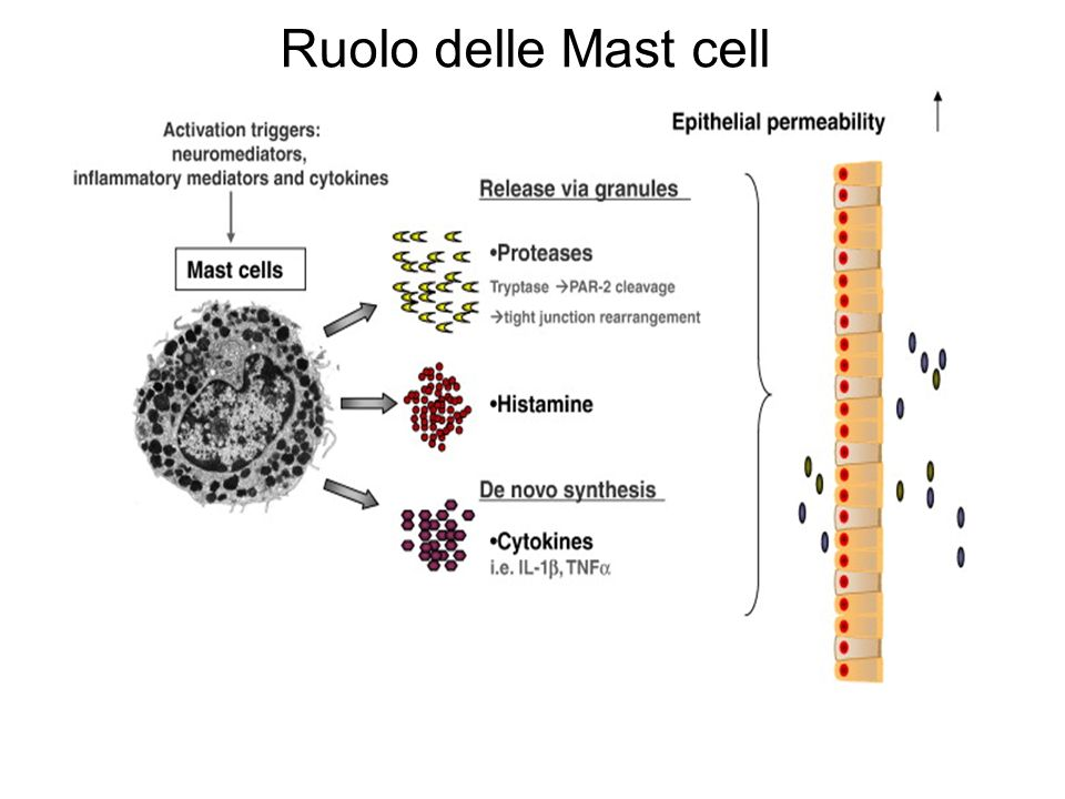 Ruolo delle Mast cell