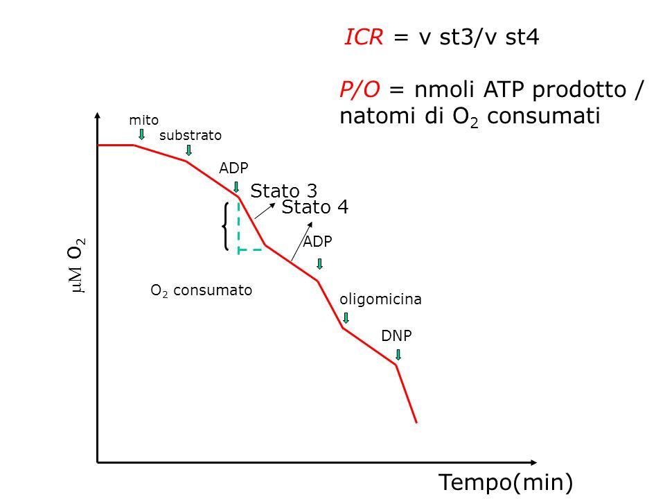 P/O = nmoli ATP prodotto / natomi di O2 consumati