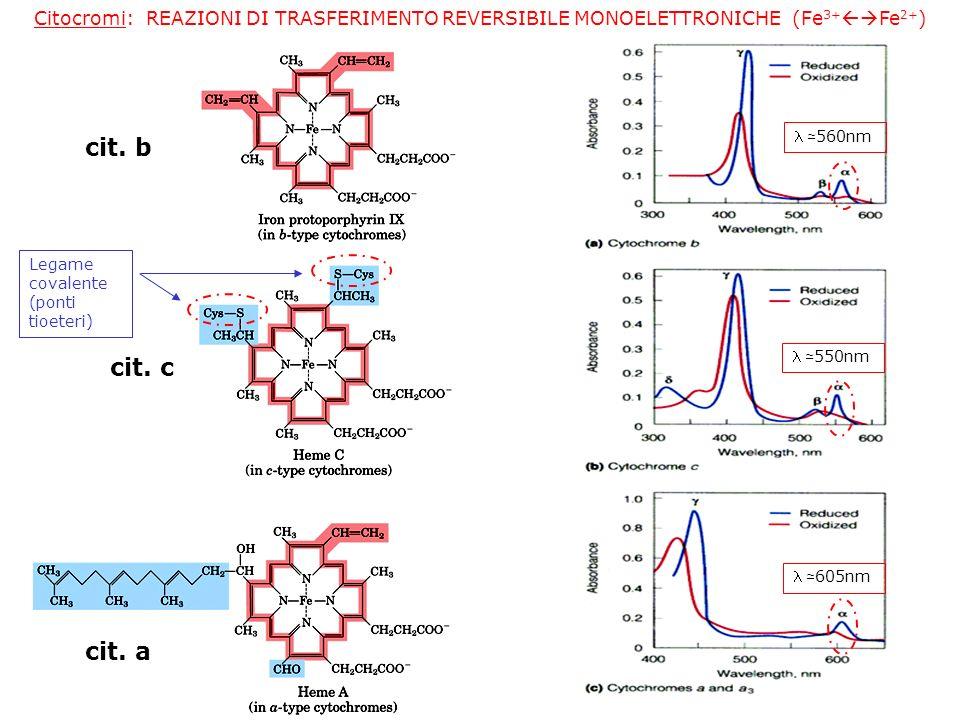 Citocromi: REAZIONI DI TRASFERIMENTO REVERSIBILE MONOELETTRONICHE (Fe3+Fe2+)