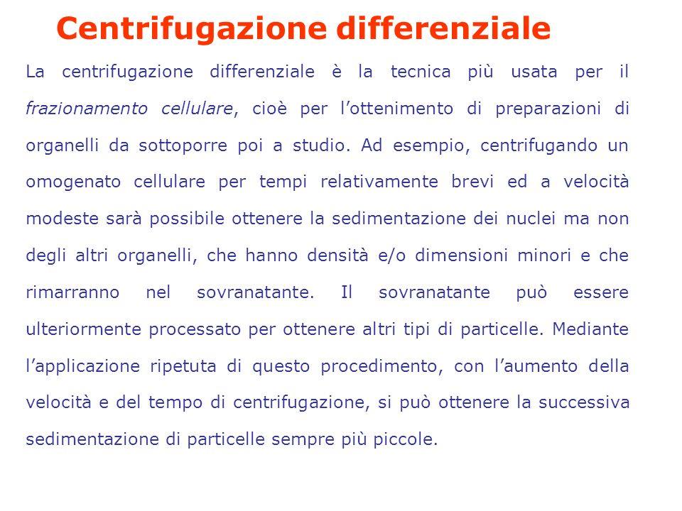Centrifugazione differenziale