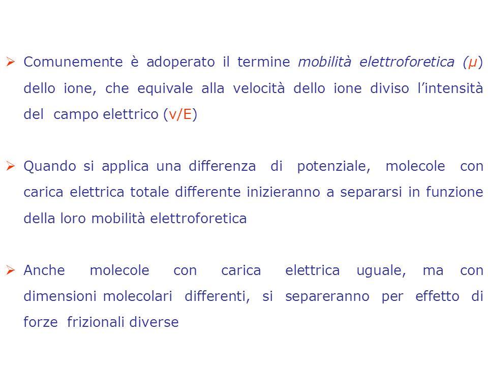 Comunemente è adoperato il termine mobilità elettroforetica (μ) dello ione, che equivale alla velocità dello ione diviso l'intensità del campo elettrico (v/E)