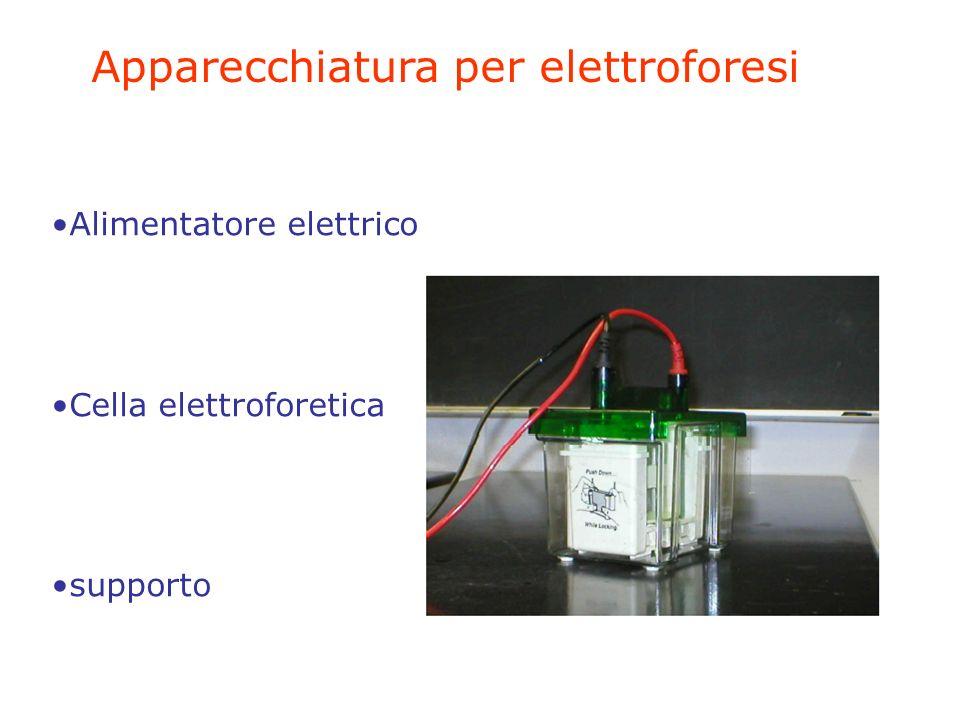 Apparecchiatura per elettroforesi