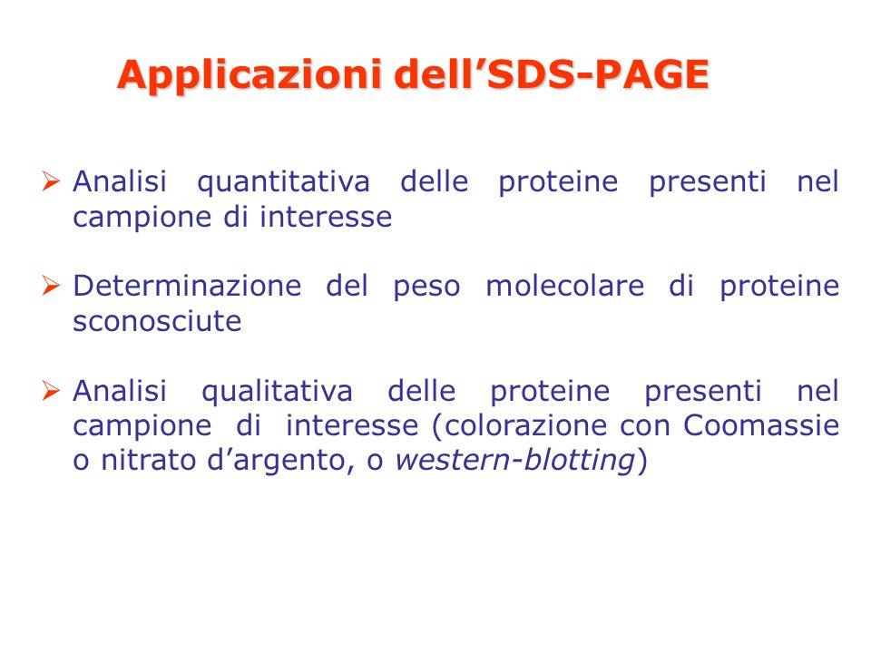 Applicazioni dell'SDS-PAGE