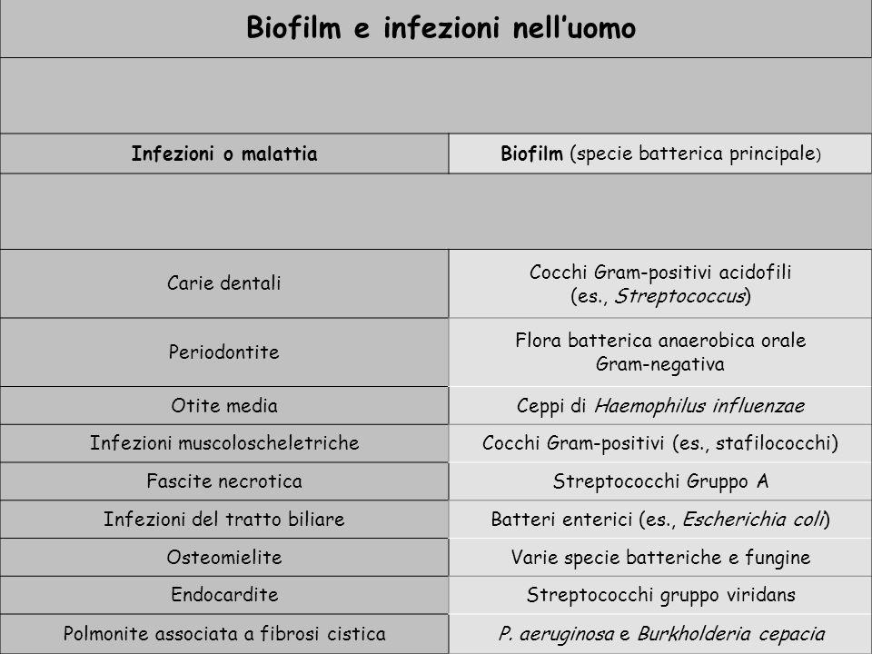 Biofilm e infezioni nell'uomo