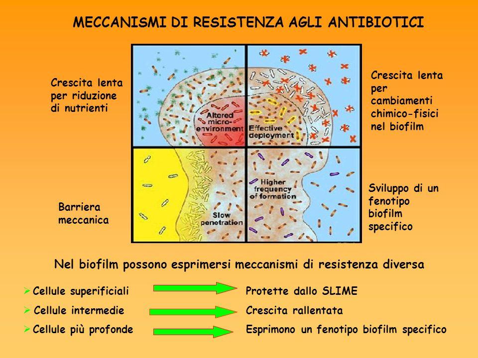 Nel biofilm possono esprimersi meccanismi di resistenza diversa