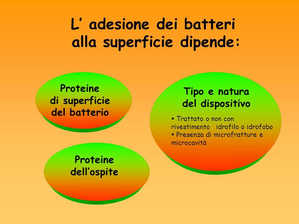 L' adesione dei batteri alla superficie dipende: