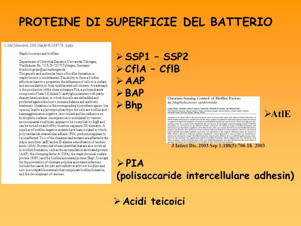PROTEINE DI SUPERFICIE DEL BATTERIO