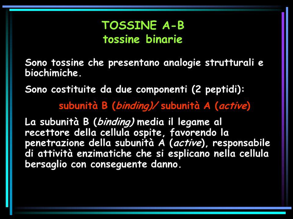 TOSSINE A-B tossine binarie