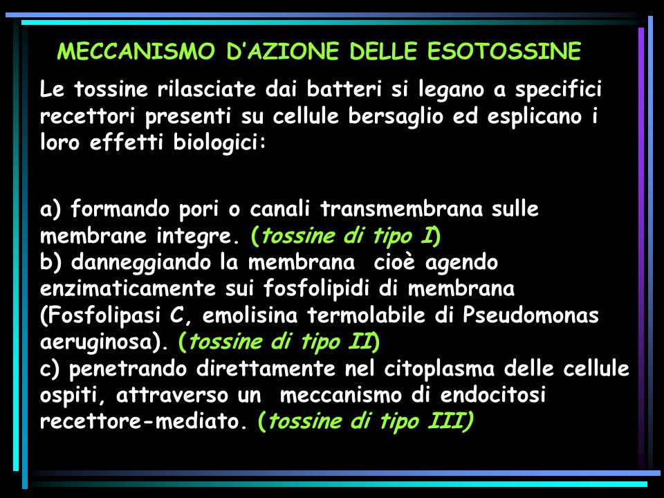 MECCANISMO D'AZIONE DELLE ESOTOSSINE