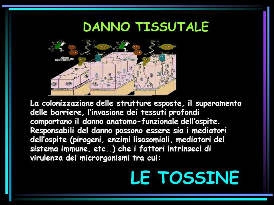 LE TOSSINE DANNO TISSUTALE