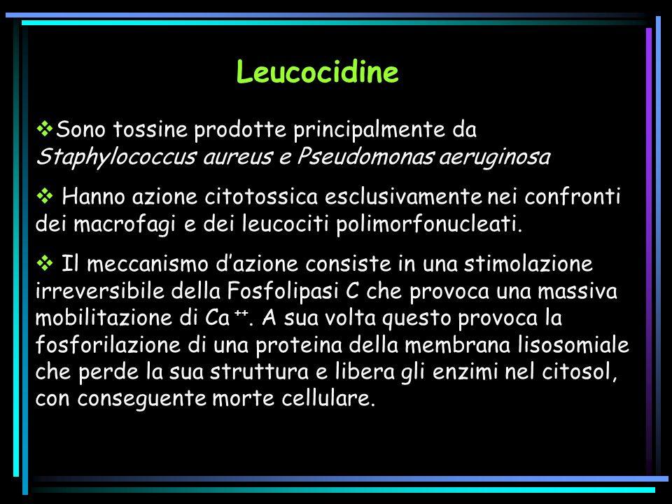 Leucocidine Sono tossine prodotte principalmente da Staphylococcus aureus e Pseudomonas aeruginosa.