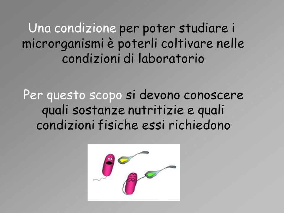 Una condizione per poter studiare i microrganismi è poterli coltivare nelle condizioni di laboratorio