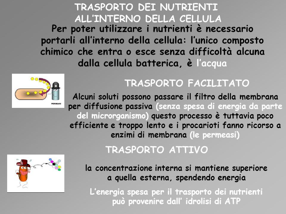 TRASPORTO DEI NUTRIENTI ALL'INTERNO DELLA CELLULA