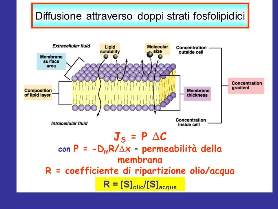 Diffusione attraverso doppi strati fosfolipidici