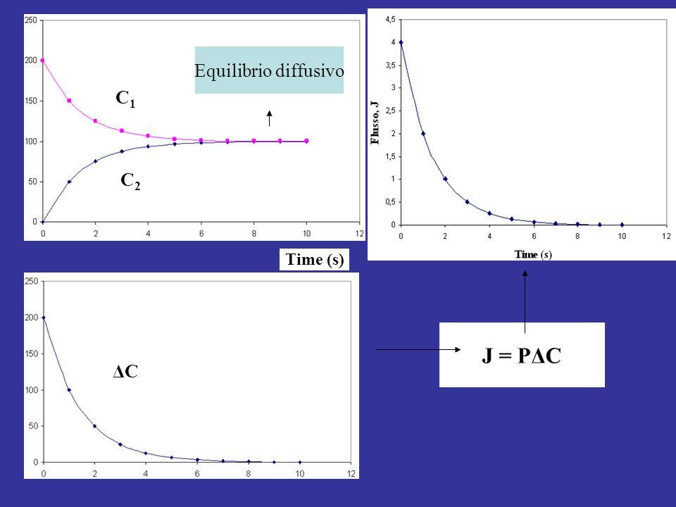 Equilibrio diffusivo C1 C2 Time (s) J = PΔC ΔC
