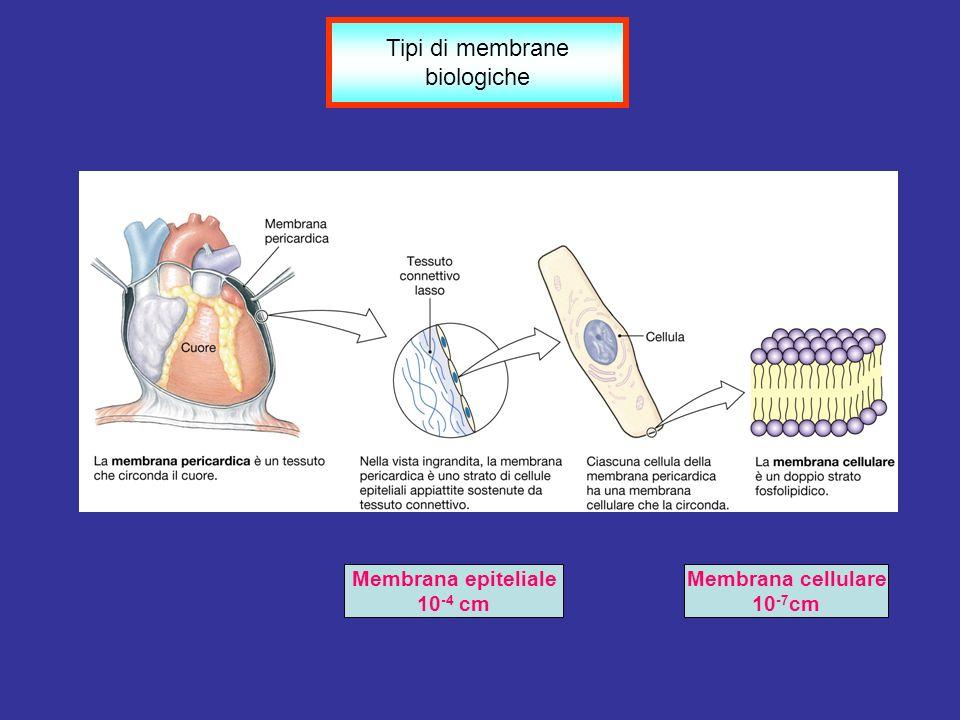 Tipi di membrane biologiche