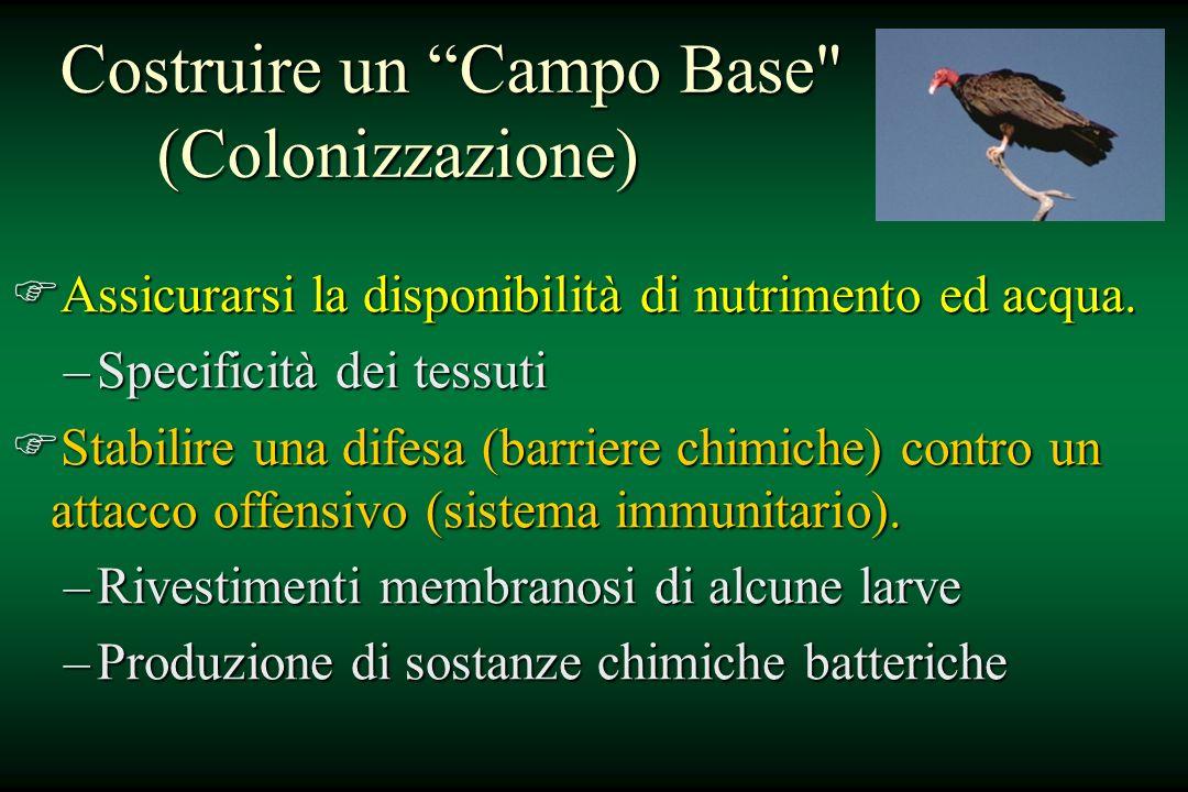 Costruire un Campo Base (Colonizzazione)