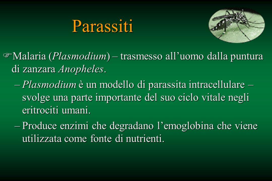 Parassiti Malaria (Plasmodium) – trasmesso all'uomo dalla puntura di zanzara Anopheles.