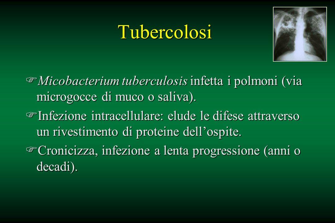 Tubercolosi Micobacterium tuberculosis infetta i polmoni (via microgocce di muco o saliva).