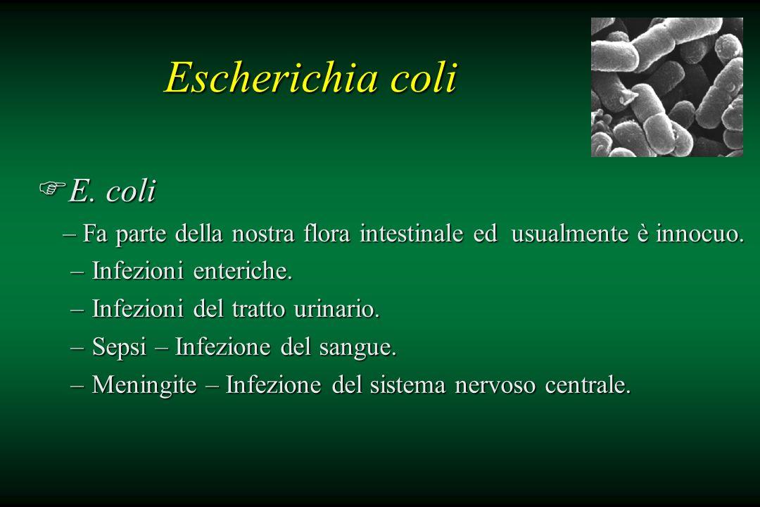 Escherichia coli E. coli