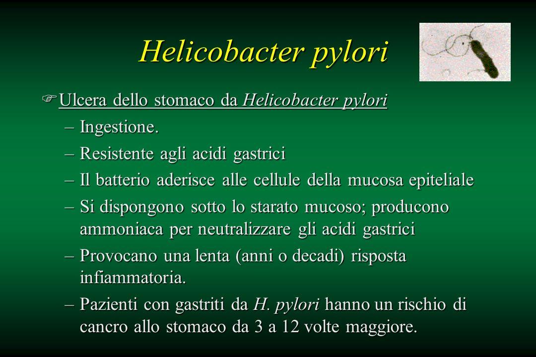 Helicobacter pylori Ulcera dello stomaco da Helicobacter pylori