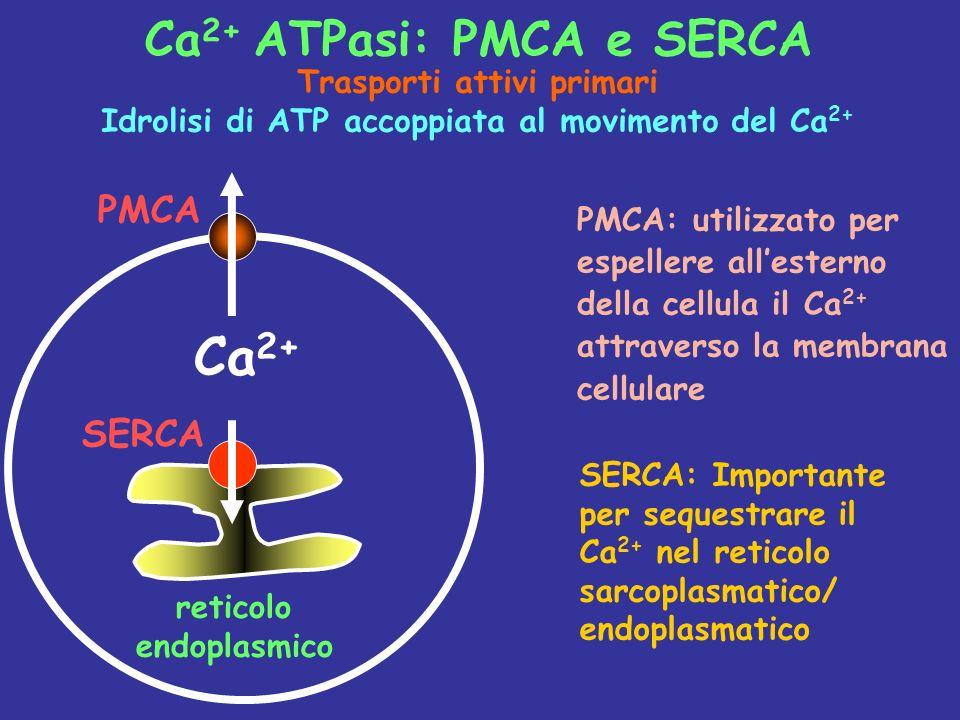 Ca2+ Ca2+ ATPasi: PMCA e SERCA PMCA SERCA Trasporti attivi primari