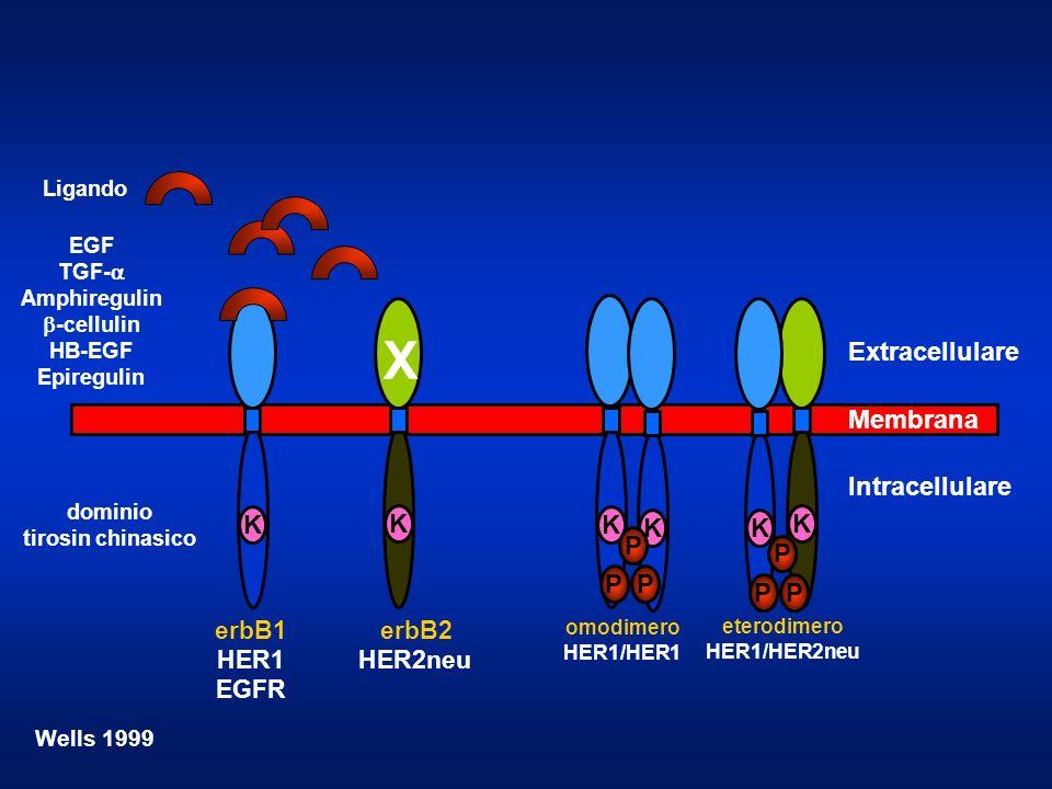 X Extracellulare Membrana Intracellulare K K K K K K P P P P P P
