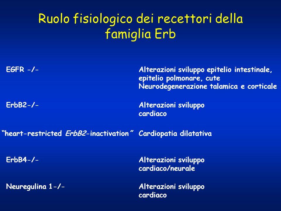 Ruolo fisiologico dei recettori della famiglia Erb