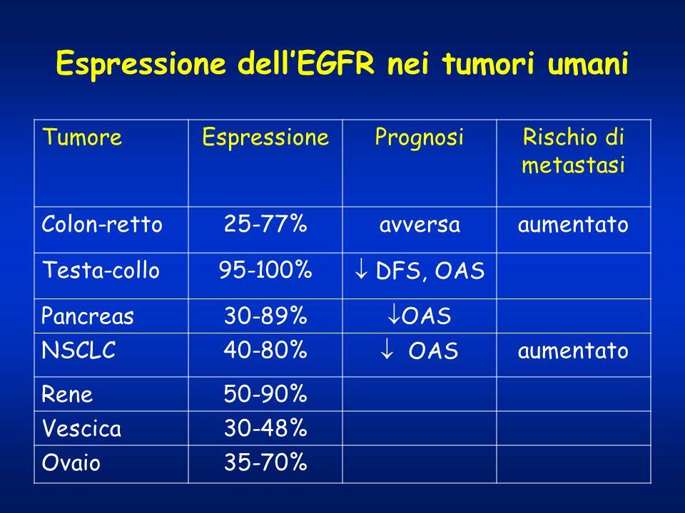 Espressione dell'EGFR nei tumori umani