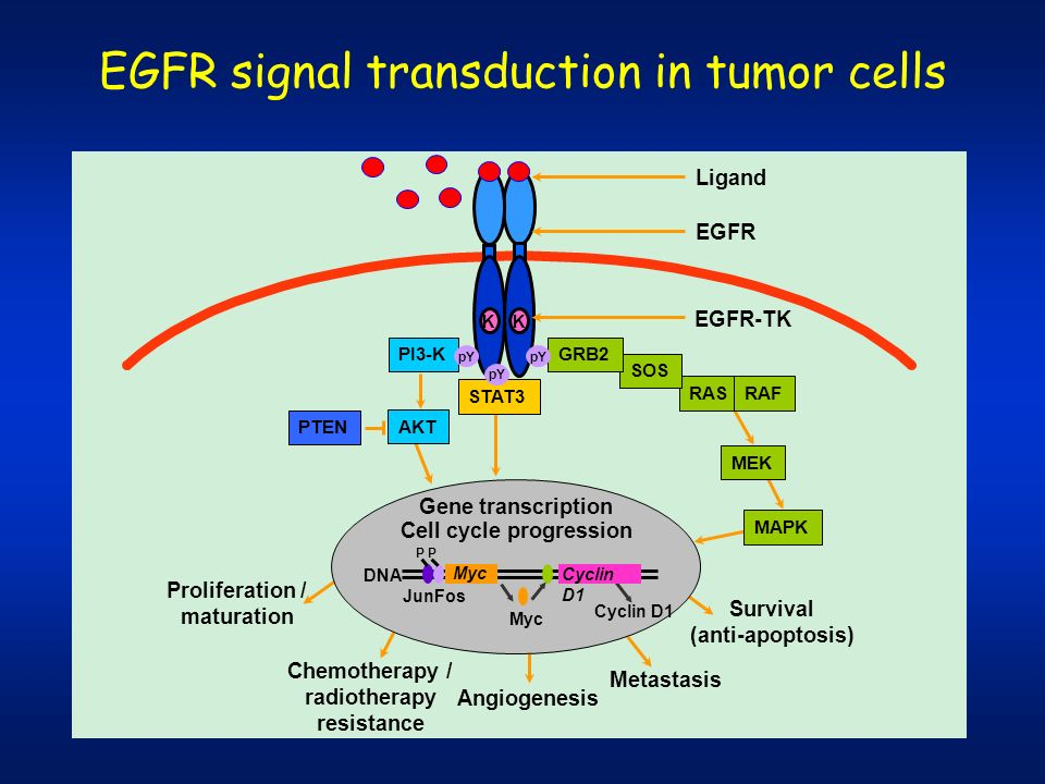 EGFR signal transduction in tumor cells