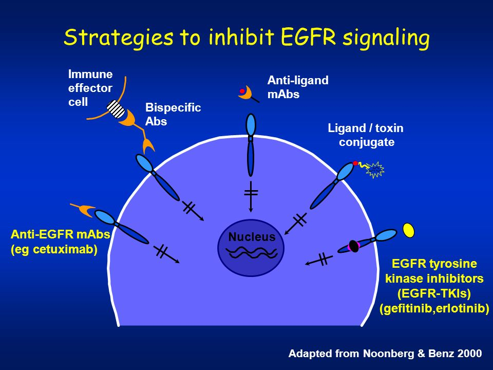 Strategies to inhibit EGFR signaling