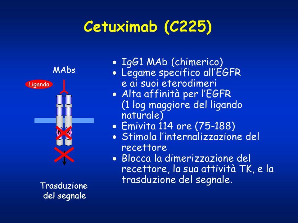 Cetuximab (C225) IgG1 MAb (chimerico)