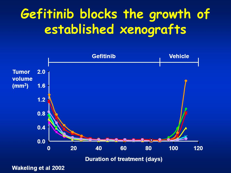 Gefitinib blocks the growth of established xenografts