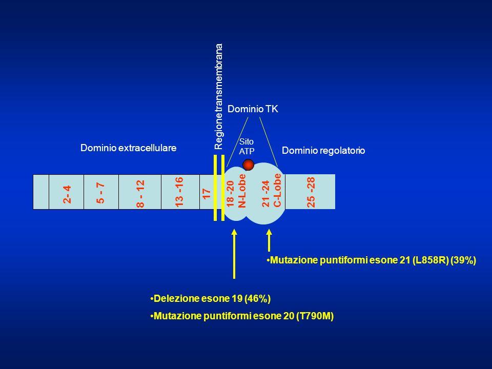 2- 4 5 - 7 8 - 12 13 -16 17 25 -28 Regione transmembrana Dominio TK