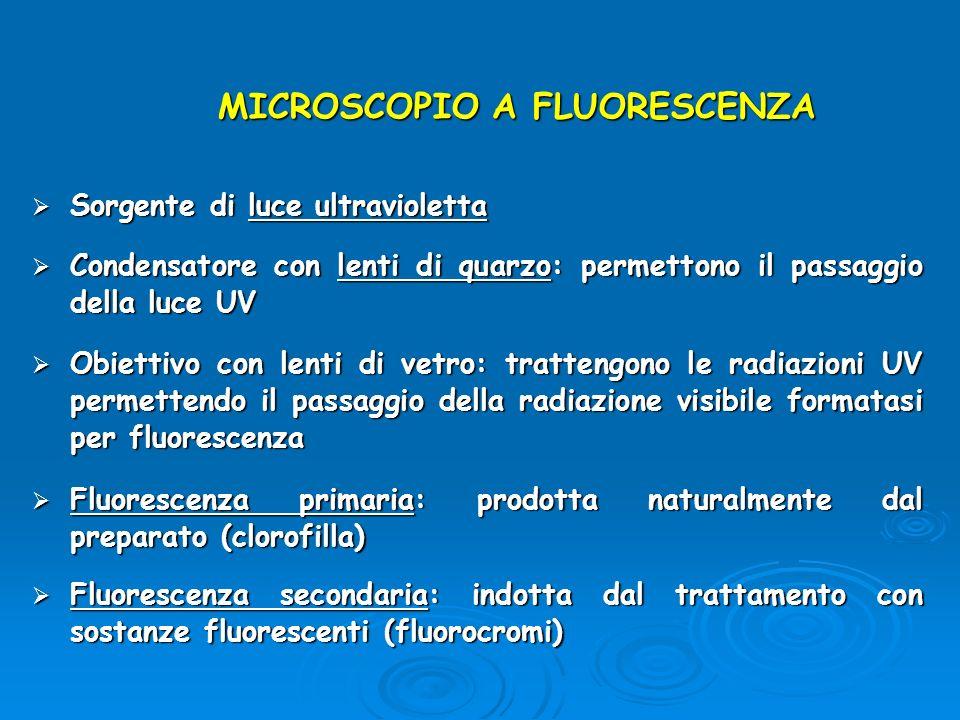 MICROSCOPIO A FLUORESCENZA