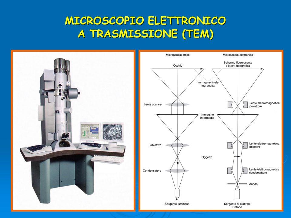 MICROSCOPIO ELETTRONICO A TRASMISSIONE (TEM)