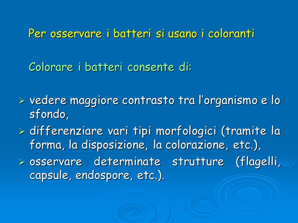 Per osservare i batteri si usano i coloranti