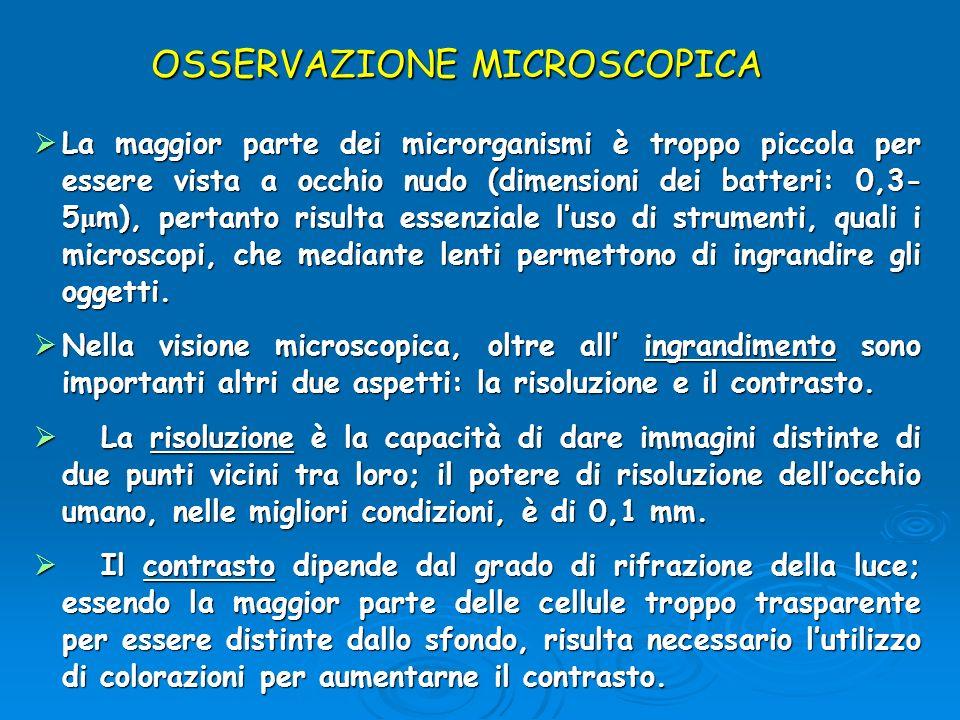 OSSERVAZIONE MICROSCOPICA