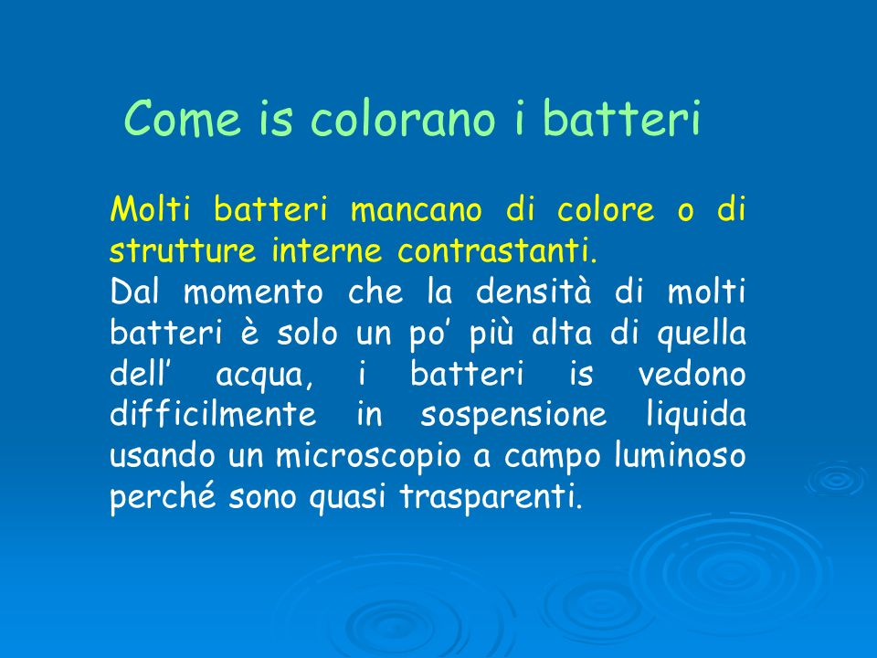 Come is colorano i batteri