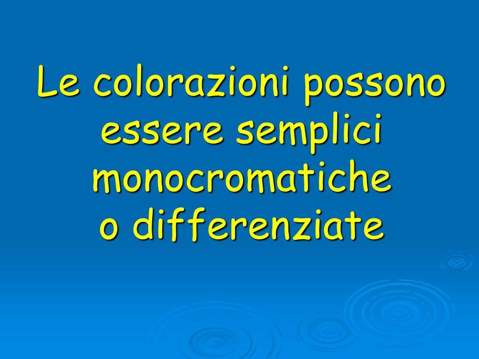 Le colorazioni possono essere semplici monocromatiche o differenziate