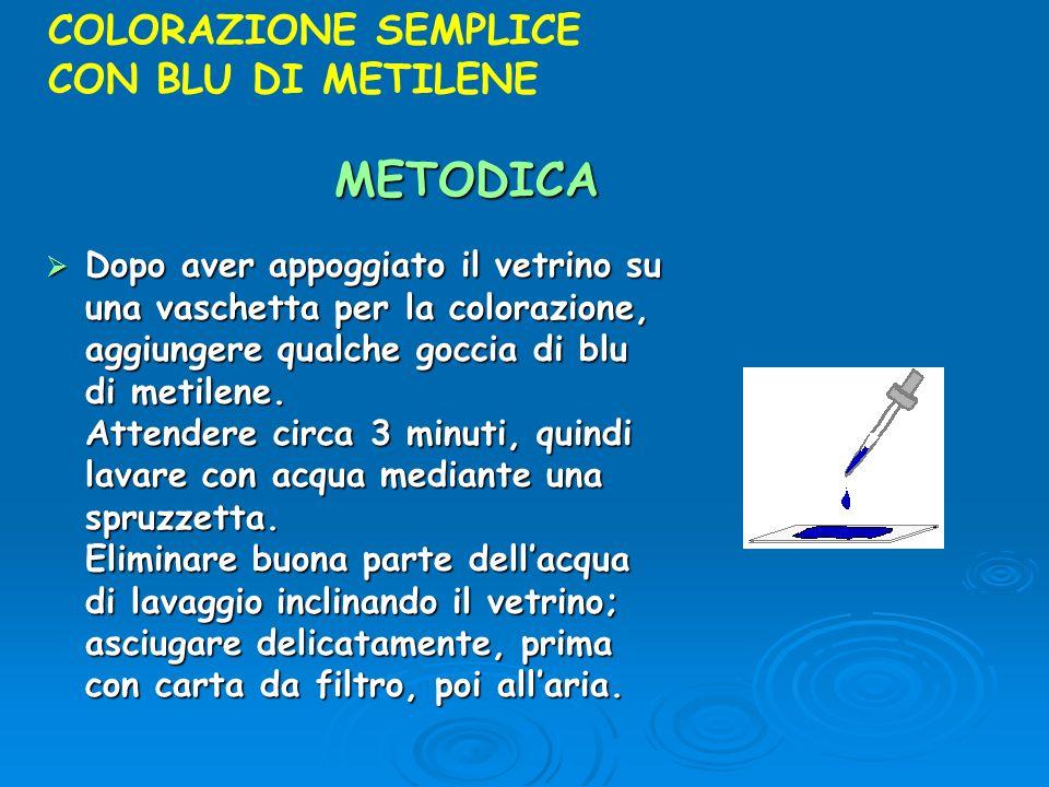 METODICA COLORAZIONE SEMPLICE CON BLU DI METILENE