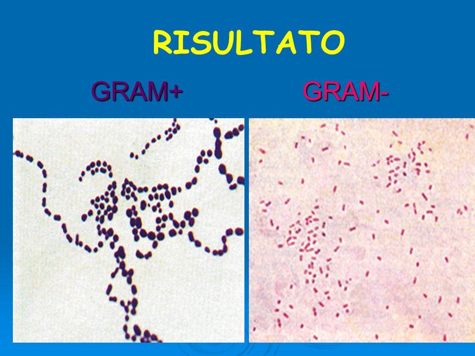 RISULTATO GRAM+ GRAM-