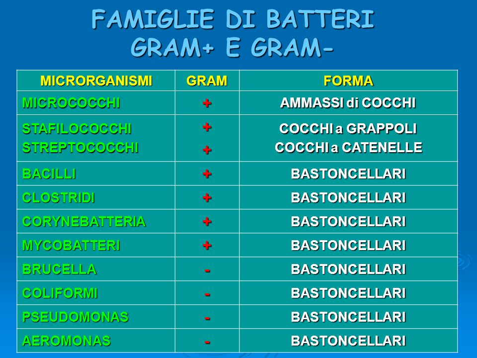 FAMIGLIE DI BATTERI GRAM+ E GRAM-