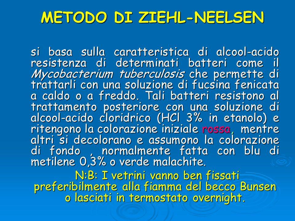 METODO DI ZIEHL-NEELSEN