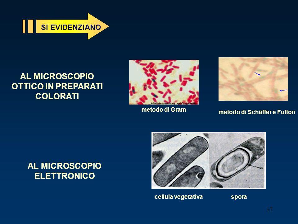 AL MICROSCOPIO OTTICO IN PREPARATI COLORATI AL MICROSCOPIO ELETTRONICO