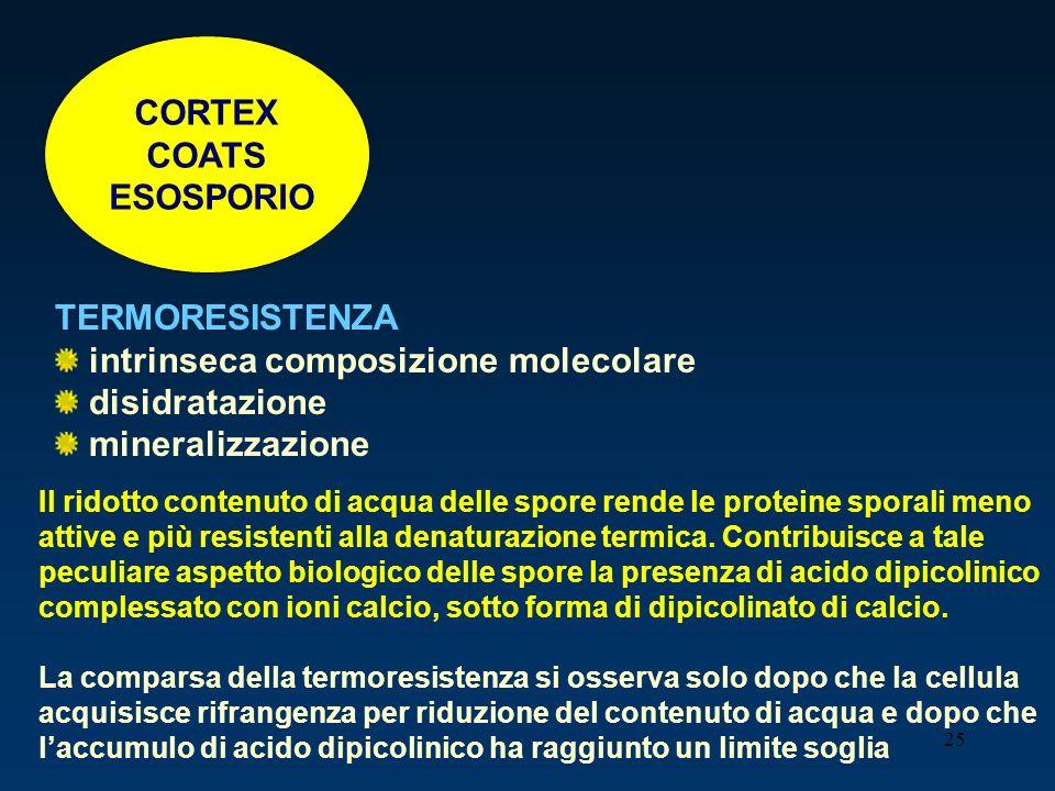 CORTEX COATS ESOSPORIO