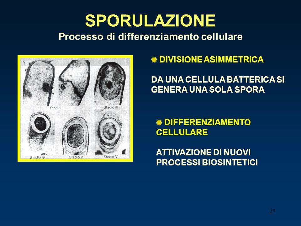 Processo di differenziamento cellulare